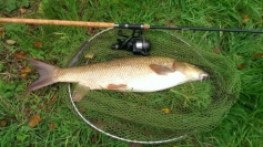 A barbel at 11lb 3oz from our Avon stretch for Bailliff Dave (Bazz) Barry . Nov 2015.