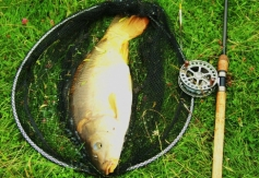 Typical Bradley Green carp caught on very simple tactics in the margins. 2013.